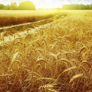 Законы успеха: сеяние и жатва