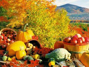 fall-harvest300